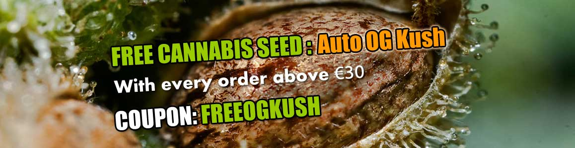 Fresh OG Kush Autoflower Seed