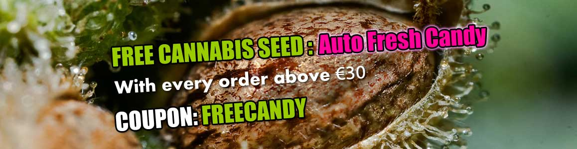 Free Fresh Candy Autoflower Seed