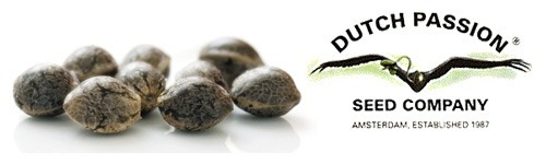 Dutch Passion | Buy the best cannabis seeds