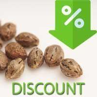 Cannabis Seeds Sale