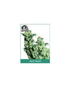 Jack Herer Sensi Seeds (Indoor / Regular)
