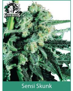 Sensi Skunk Sensi Seeds (Indoor / Regular)