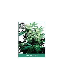 Skunk Kush Sensi Seeds (Indoor / Regular)