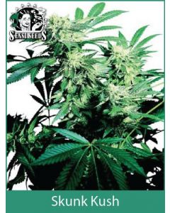 Skunk Kush Sensi Seeds (Indoor / Regular)