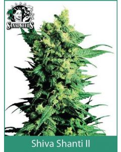 Shiva Shanti 2 Sensi Seeds (Indoor / Regular)