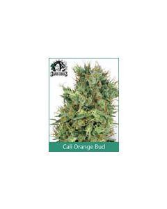 Cali Orange Bud Sensi Seeds (Regular)
