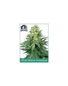 White Widow Sensi White Label