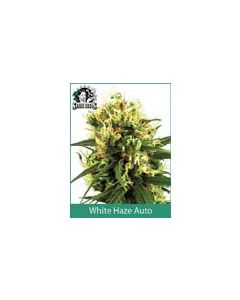 White Haze Automatic Sensi WL