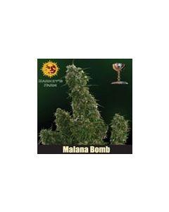 Malana Bomb Autoflower