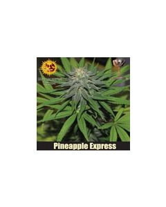 Pineapple Express Autoflower Barneys Farm