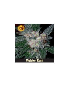 Violator Kush Barneys Farm