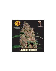Laughing Buddha Barneys Farm