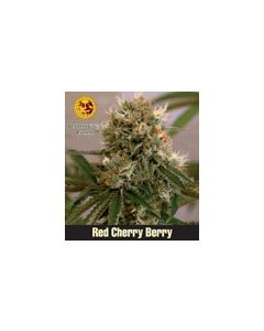 Red Cherry Berry (Feminised) Barneys Farm