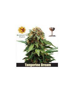 Tangerine Dreams Barneys Farm