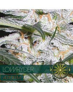 Low Ryder Autoflower Vision Seeds