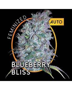 Blueberry Bliss AutoFem Zaden