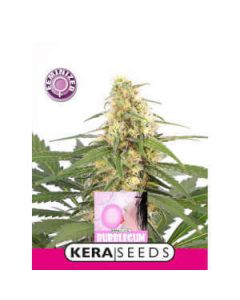 Bubblegum Kera Seeds