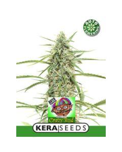 Crazy Bud Auto Kera Seeds
