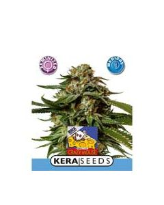 Kera Medical Cheese