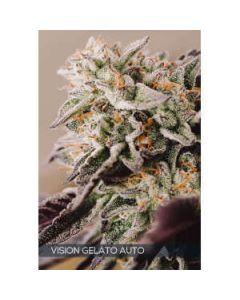 Gelato Auto Vision Seeds