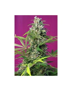 Gorilla Girl Feminized