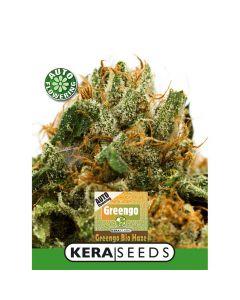 Greengo Bio Haze Auto Kera Seeds