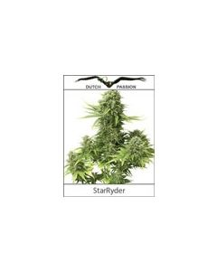 StarRyder Autoflower