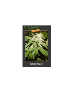 White Widow Nirvana