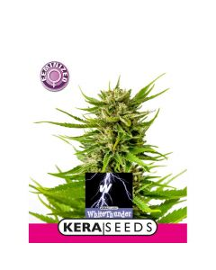 White Thunder Kera Seeds