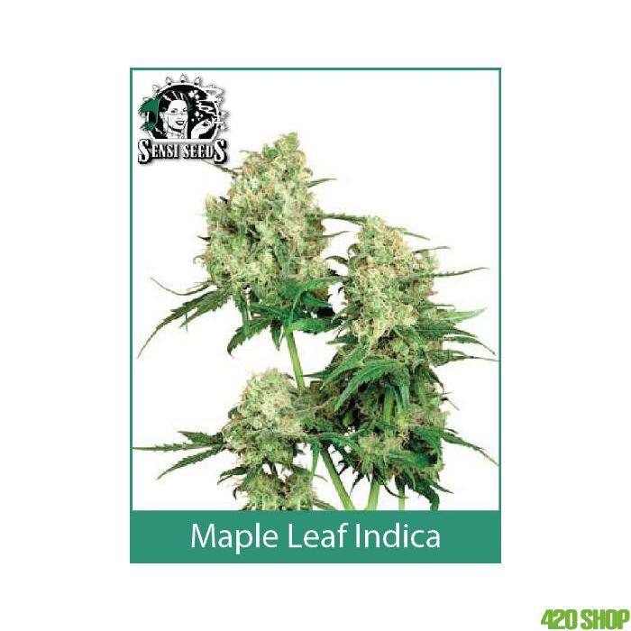 Maple Leaf Indica Sensi Seeds (Indoor / Regular)