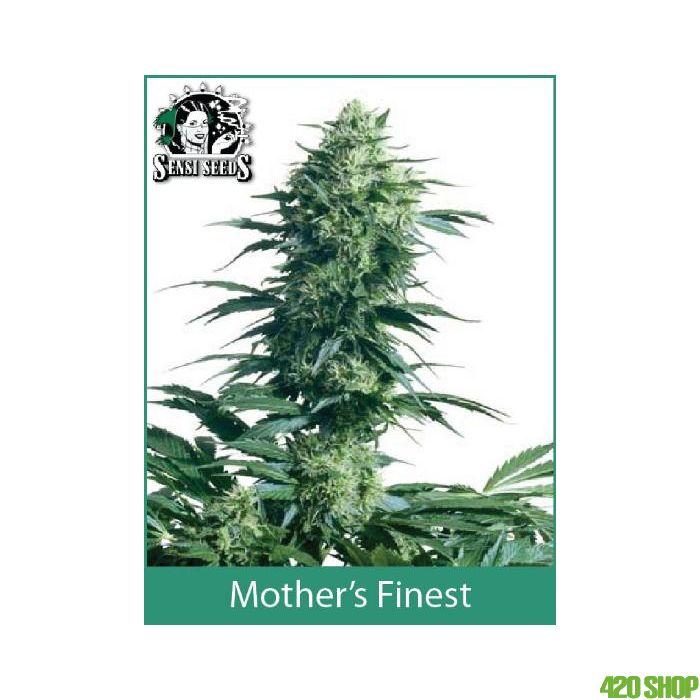 Mothers Finest Sensi Seeds (Indoor /  Regular)