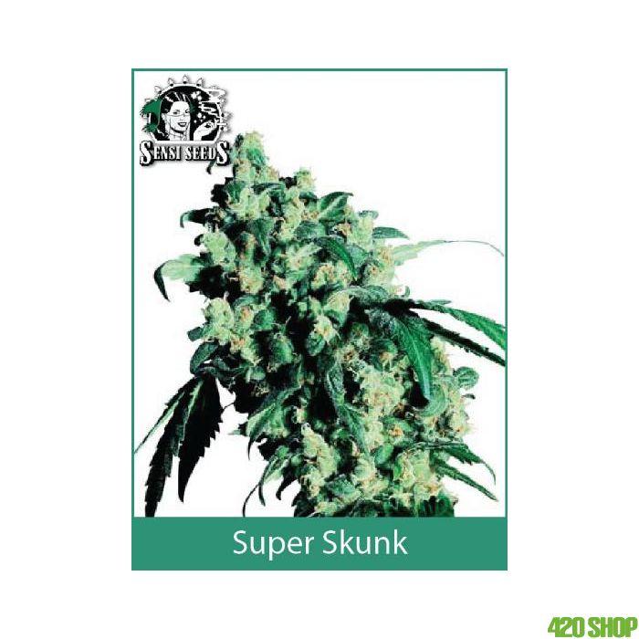 Super Skunk Sensi Seeds (Indoor / Regular)