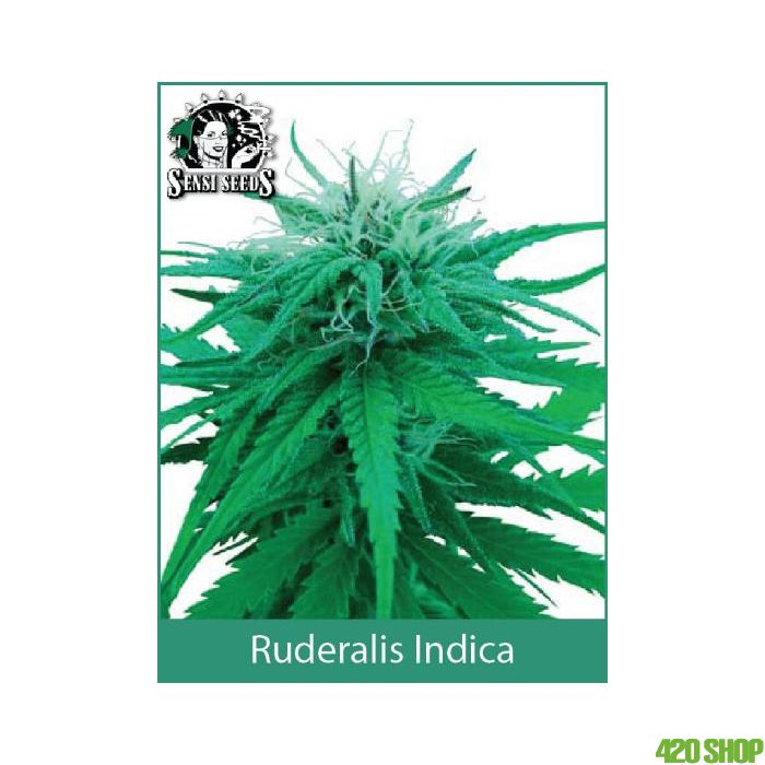 Ruderalis Indica Sensi Seeds (Outdoor / Regular)