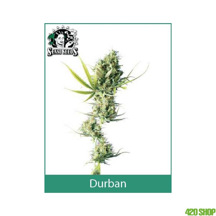 Durban Outdoor Sensi Seeds (Regular)