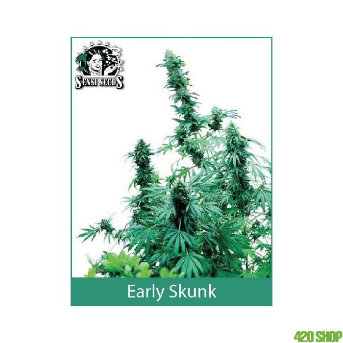 Early Skunk Sensi Seeds (Outdoor / Regular)