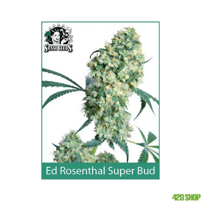 Ed Rosenthal Super Bud Sensi Seeds (Indoor / Regular)