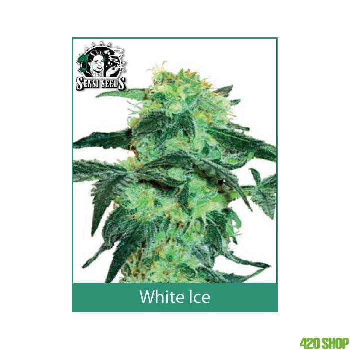 White Ice Regular White Label