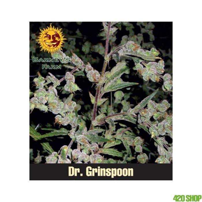 Dr Grinspoon (Feminised) Barneys Farm
