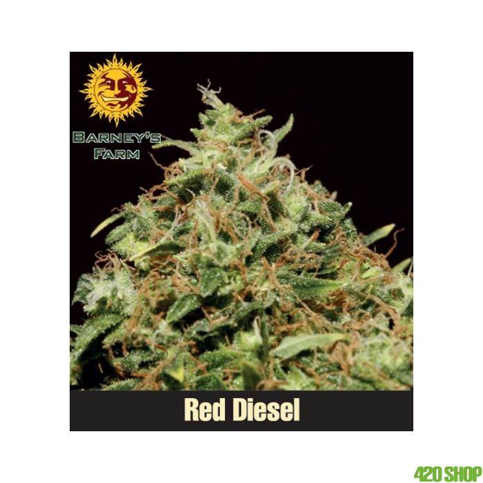 Red Diesel (Feminised) Barneys Farm