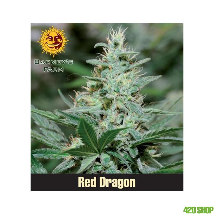 Red Dragon (Feminised) Barneys Farm