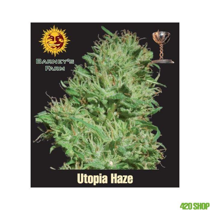 Utopia Haze Barneys Farm