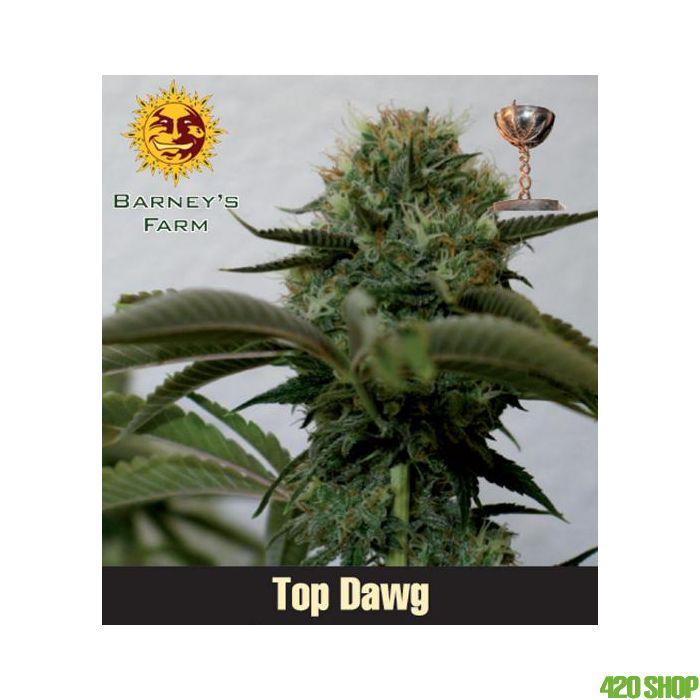 Top Dawg Barneys Farm