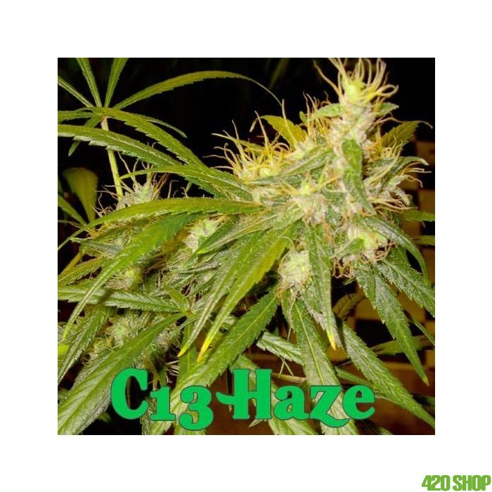 C13 Haze DNA Genetics