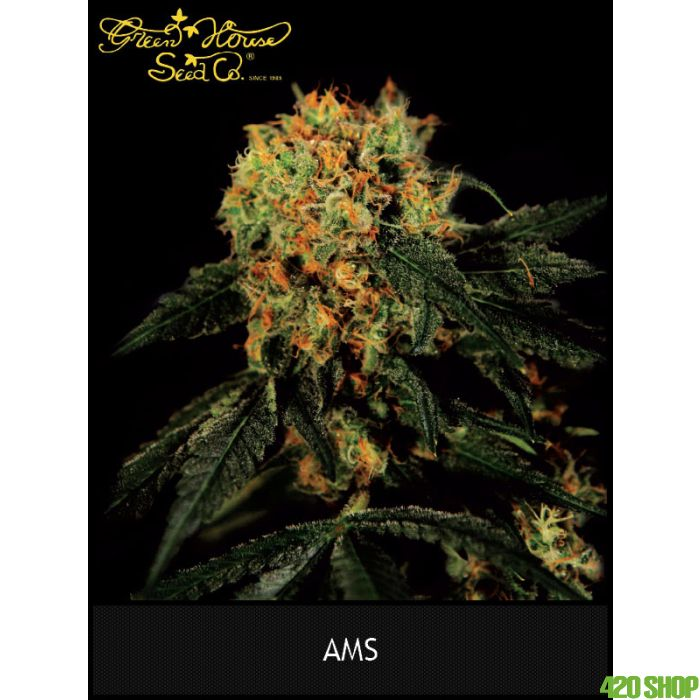A.M.S.