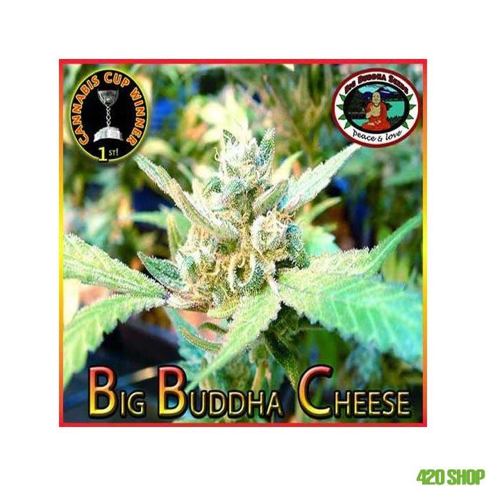 Big Buddha Cheese Zaden