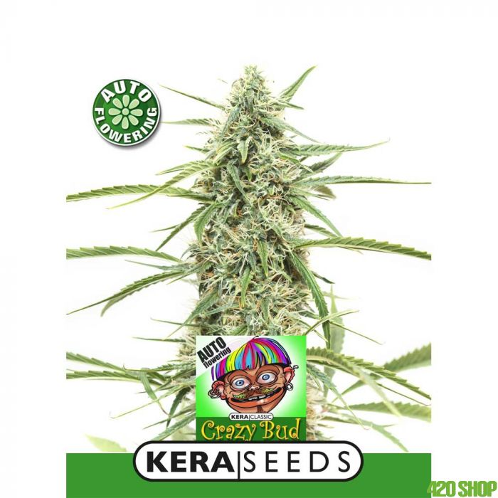 Crazy Bud Auto Kera Seeds