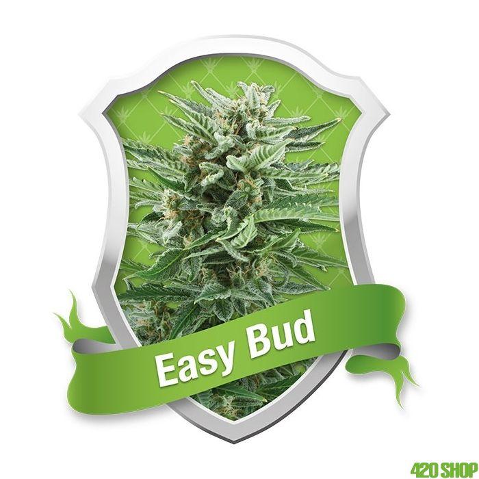Easy Bud Autoflower