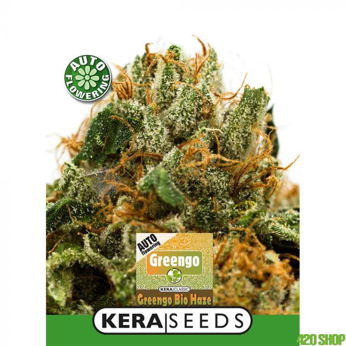Greengo Bio Haze Auto Kera Seeds