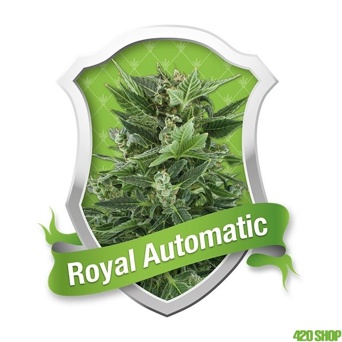 Royal Automatic Verpakking