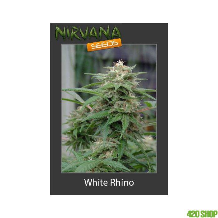White Rhino Nirvana